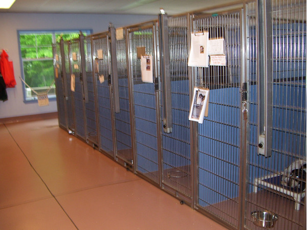 animal rescue shelters